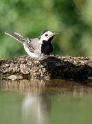 Wagtail groove. - stock photo