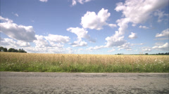 A woman jogging next to a corn field, Sweden. Stock Footage