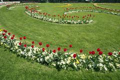 Stock Photo of tulips in the Baroque Mirabell Garden