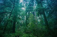 American Northwest Rainforest Foggy Landscape. - stock photo