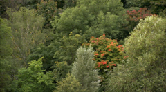 Green leaves on trees, Sweden. Stock Footage