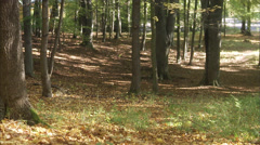 Mother and daughter walking in a forest, Stockholm, Sweden. - stock footage