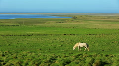 Beautiful White Horse in a Green Field. Stock Footage