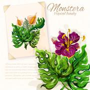Stock Illustration of Monstera leaves with hibiscus flowers design