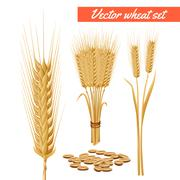 Wheat plant heads and grain poster Stock Illustration