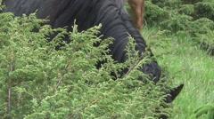 Ukraine, horses in mountains Stock Footage