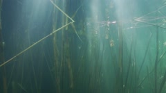 Stock Video Footage of sunbeams penetrate spectacular below the water surface with underwater cane