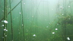 Underwater oxygen bubbles rise in slow motion in a freshwater lake with reeds Stock Footage
