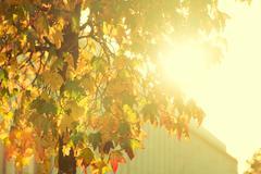 Bright sunburst through leafy tree - stock photo