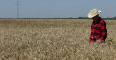 Proud Farmland Owner Analyse Wheat Harvest Walk Crop Fields Gold Grain Culture Stock Footage