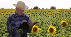 Farmer Taking Notes Analyze Professional Examining Sunflower Organic Agriculture Stock Footage
