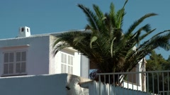 Spain Mallorca Island Cala Blava 029 penthouse apartment with big palm tree Stock Footage