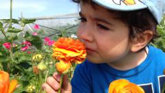 Boy smelling a blooming flower Stock Footage