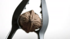 SLO MO CU Studio shot of walnut in nut cracker against white background Stock Footage