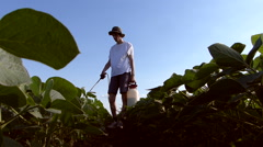 Weed sprinkling on soybean field. - stock footage