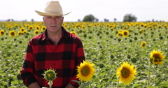 Countryside Men Speaking News TV Reportage Confident Interview Sunflower Crop Stock Footage