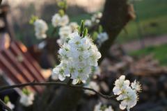 Blooms - stock photo