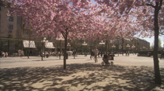 WS PAN People walking around cherry tree at Kungstradgarden / Stockholm, Sweden, Stock Footage