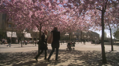 WS T/L People walking around cherry tree at Kungstradgarden / Stockholm, Sweden, Stock Footage