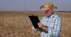 Agriculture Industry Farmer Men Notes Data Field Crop Wheat Harvest Production Stock Footage