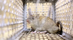 Rat trap, Background of the fear, Feeling of blur background. - stock footage