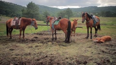 Horses on a leash against mountains 1 Stock Footage