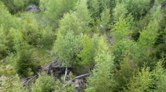 Top view of a mixed forest Stock Footage