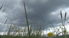 Carpathian Mountains,  flower, Polonyna Stock Footage