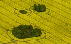 Aerial view rape fields in full bloom with enclosed groves Gross Pankow Stock Photos