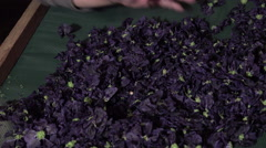 Preparation and drying of flowers and leaves Stock Footage