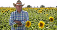 Countryside Agronomist Person Sunflower Field Production Speaking TV Debate Stock Footage