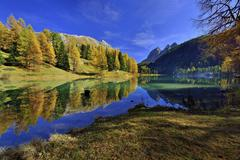 Autumnally coloured larch trees reflected in lake Lei da Palpuogna Albula Pass Stock Photos