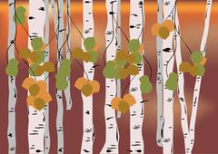 Stock Illustration of Birch grove