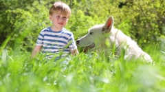Little boy in striped T-shirt sitting on grass with white dog Stock Footage