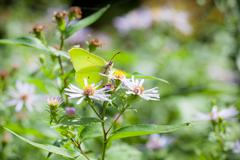 Butterfly and flower in summer nature Stock Photos
