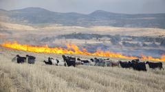 Field fire in eastern Anatolia Turkey Asia Stock Photos