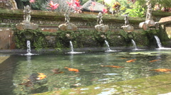 Fish in The Spring Water Temple Bali 4K Stock Footage