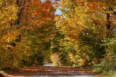 Dirt road in autumn Austin Eastern Townships Quebec Canada North America Stock Photos