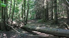 Dark shadow path Stirling Cambusbarron. Stock Footage