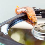 Malicious computer worm . - Concept for data security. - stock photo