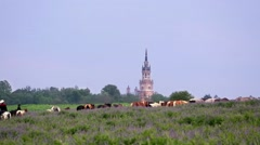 Herd of horses graze on meadow against cathedral made from bricks Stock Footage