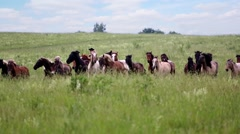 Cowboy drives herd of horses cracking the horsewhip. Stock Footage