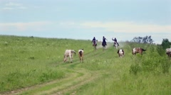 Three cowboys gallop on horses, going down the hill. Stock Footage