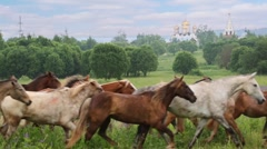Herd of horses moves at a trot under cowboy control. Stock Footage