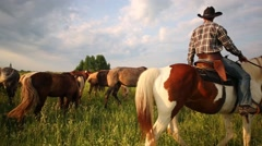 Cowboy in shirt and black hat on a piebald horse browses herd. Stock Footage