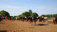 Horses walk at sanded paddock next to stable on farm. Stock Footage