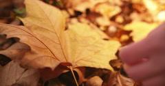 Hand picking up orange maple leaf - stock footage