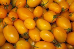 Tomatoes Solanum lycopersicum Germany Europe Kuvituskuvat
