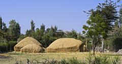 Heaps of straw from the Williams lovegrass Eragrostis tef Arsi region Oromia - stock photo