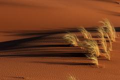 Stock Photo of Sand dune with grass tuft Namib Desert Namibia Africa